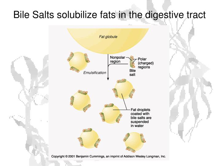 Bile Salts solubilize fats in the digestive tract