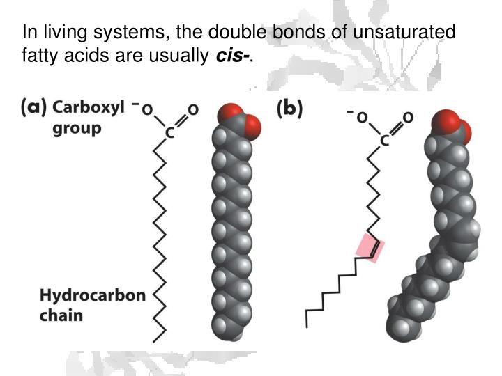 In living systems, the double bonds of unsaturated fatty acids are usually