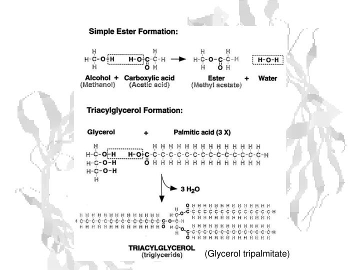 (Glycerol tripalmitate)