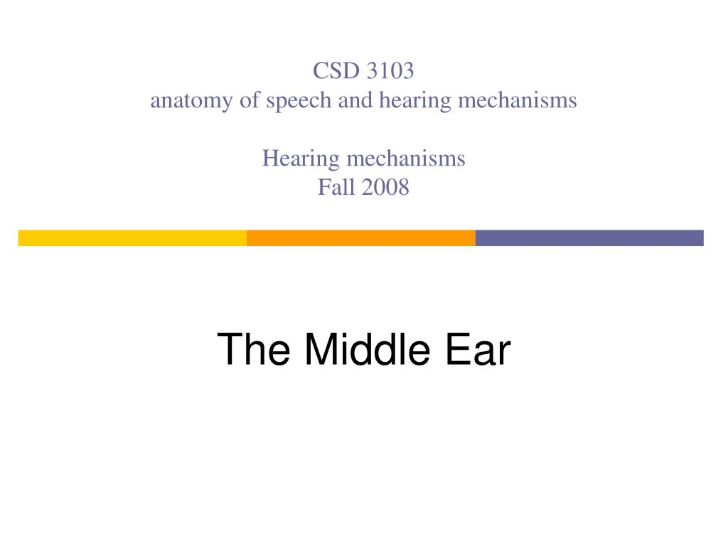 PPT - CSD 3103 anatomy of speech and hearing mechanisms Hearing ...