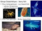 group osteichthyes bony fish