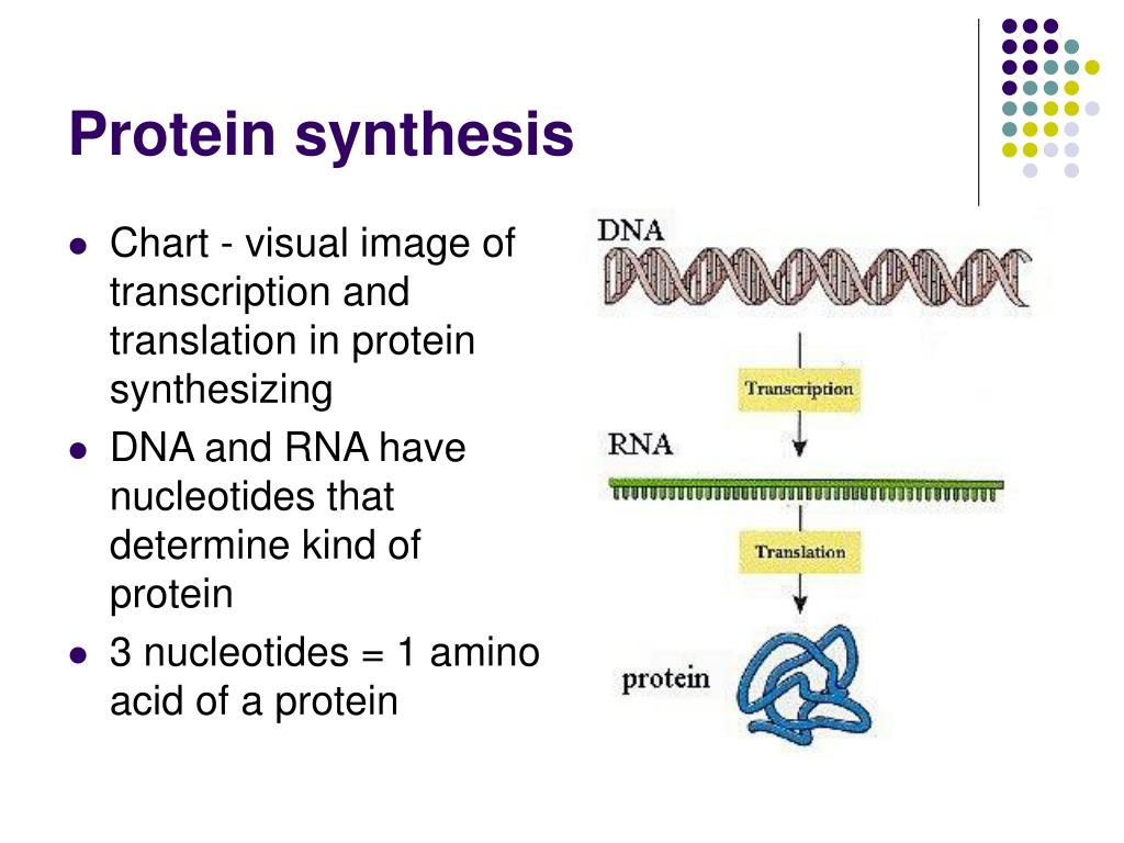 dna and protein sythesis