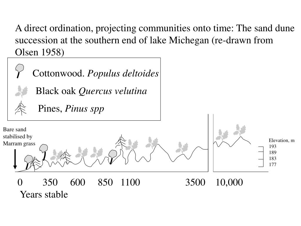 A direct ordination, projecting communities onto time: The sand dune succession at the southern end of lake Michegan (re-drawn from Olsen 1958)