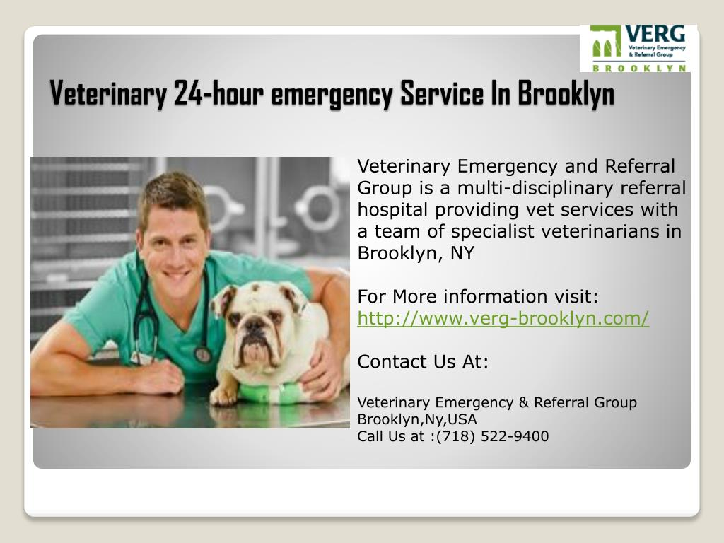 veterinary 24 hour emergency service in brooklyn l.