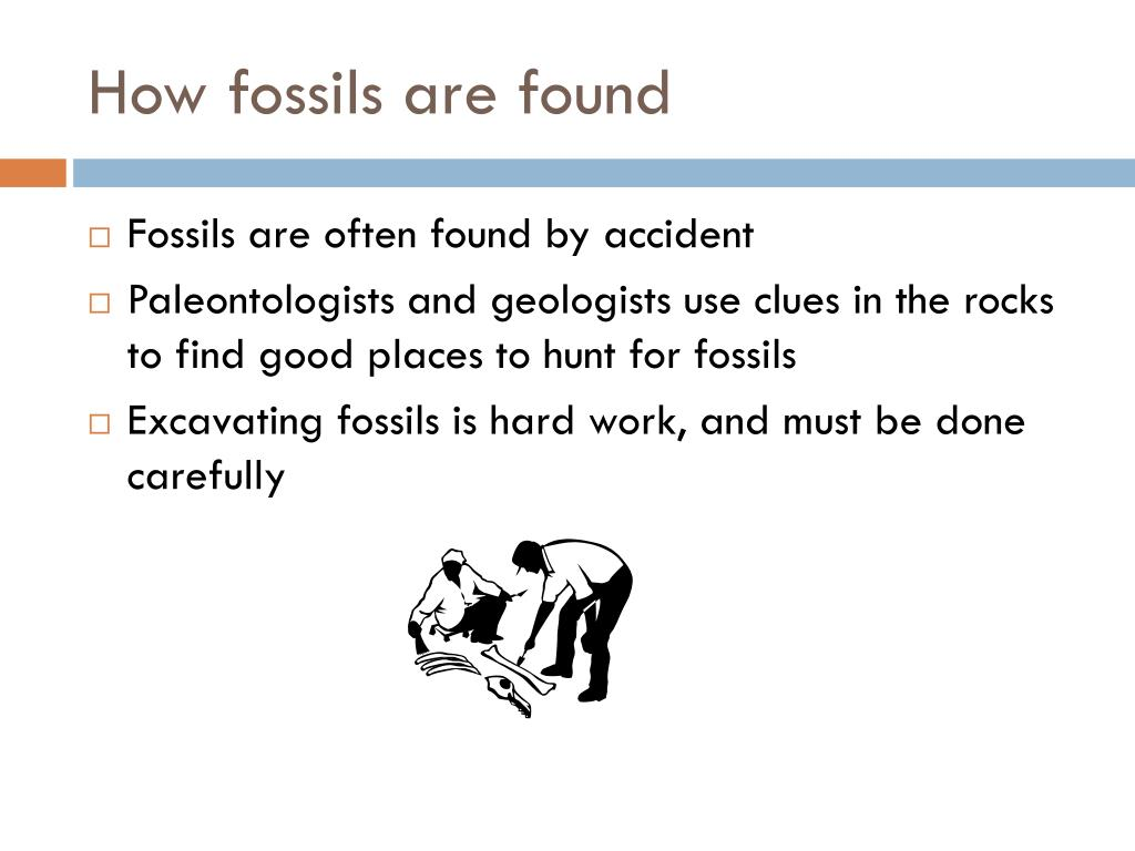 How fossils are found