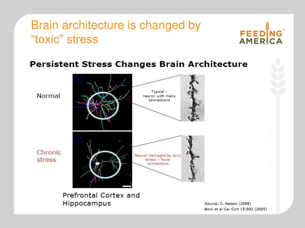 Brain architecture is changed by