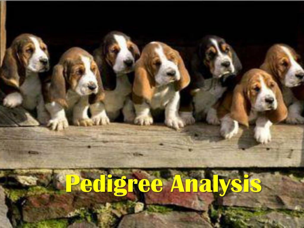 pedigree analysis l.