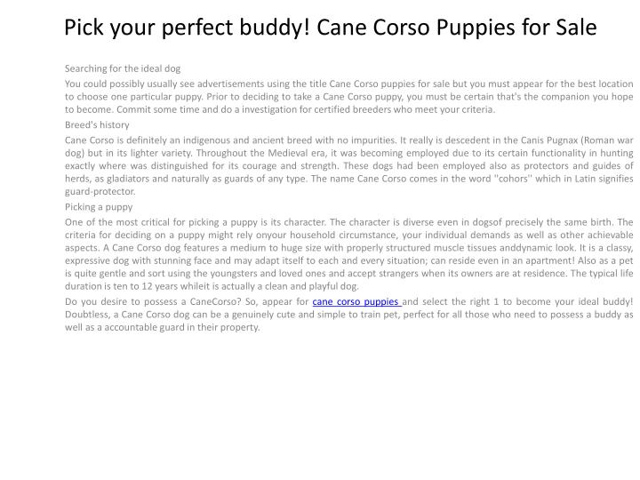 Pick your perfect buddy cane corso puppies for sale