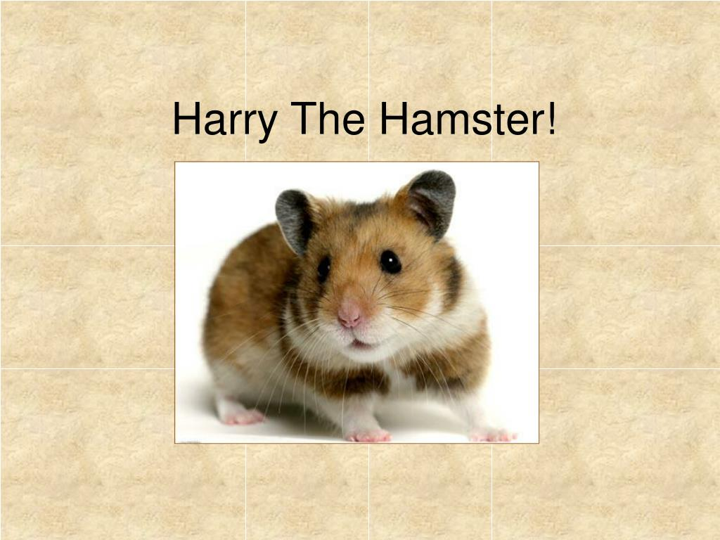 harry the hamster l.