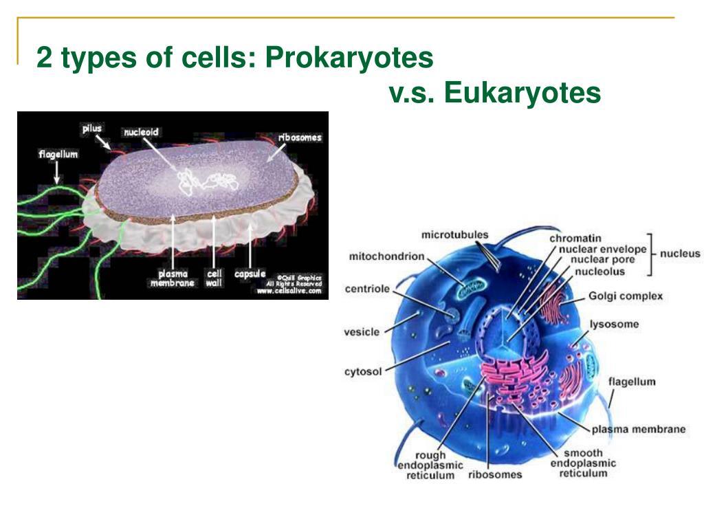 2 types of cells: Prokaryotes
