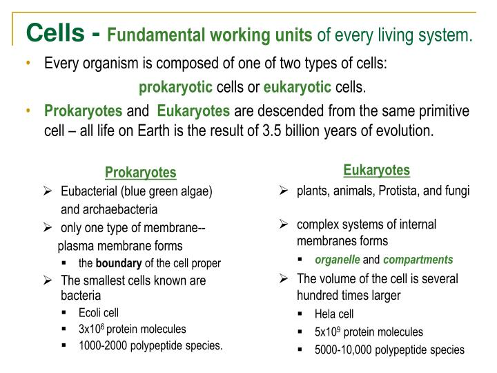 Cells fundamental working units of every living system