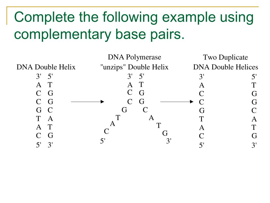 Complete the following example using complementary base pairs.