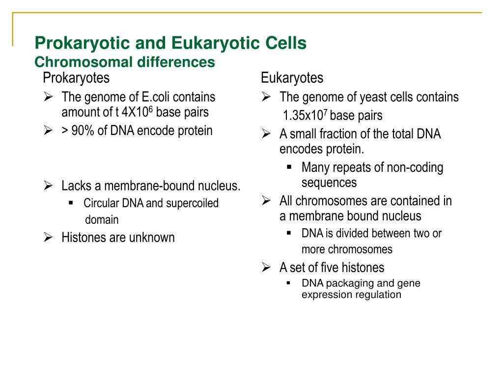 Prokaryotes