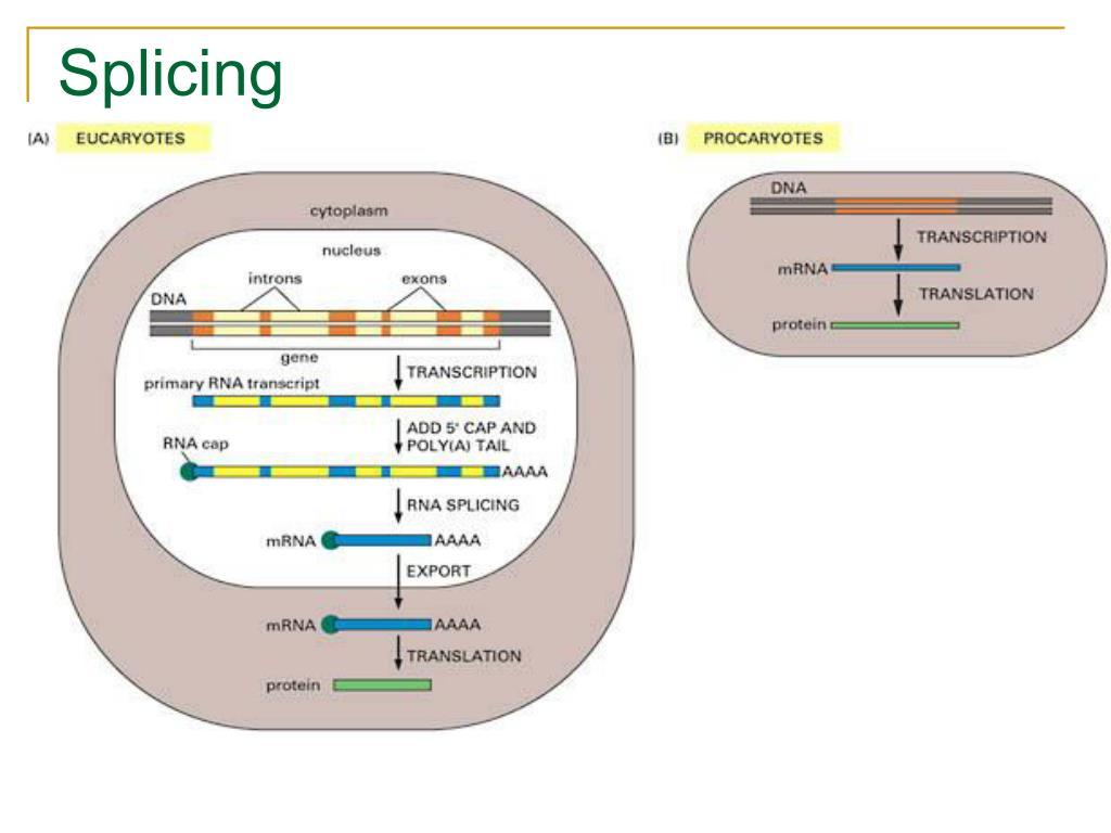 Splicing