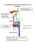 la r gulation de la fonction reproductrice chez l homme5