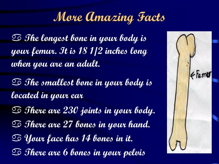 Ppt The Skeletal System And How It Works Powerpoint Presentation