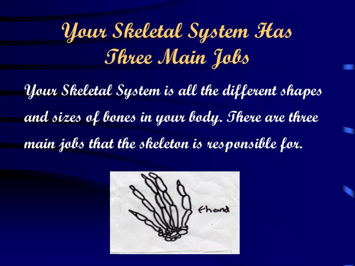 Your skeletal system has three main jobs