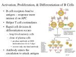 activation proliferation differentiation of b cells
