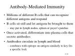antibody mediated immunity