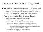natural killer cells phagocytes