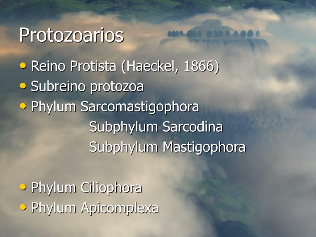 protozoarios l.