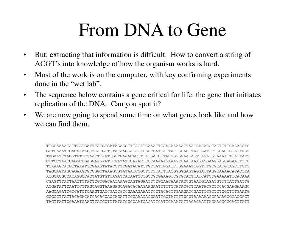 From DNA to Gene