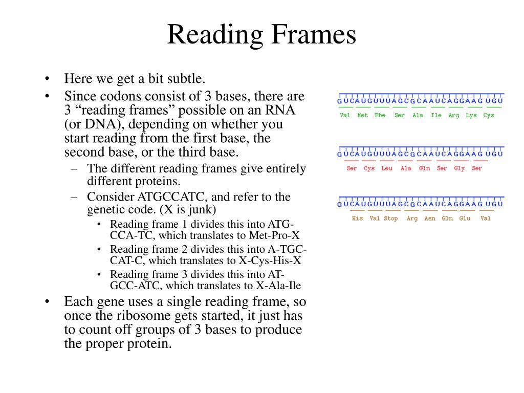 Reading Frames