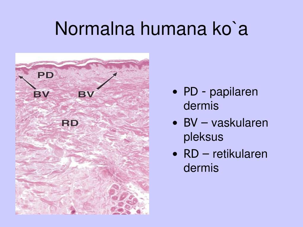 normalna humana ko a l.