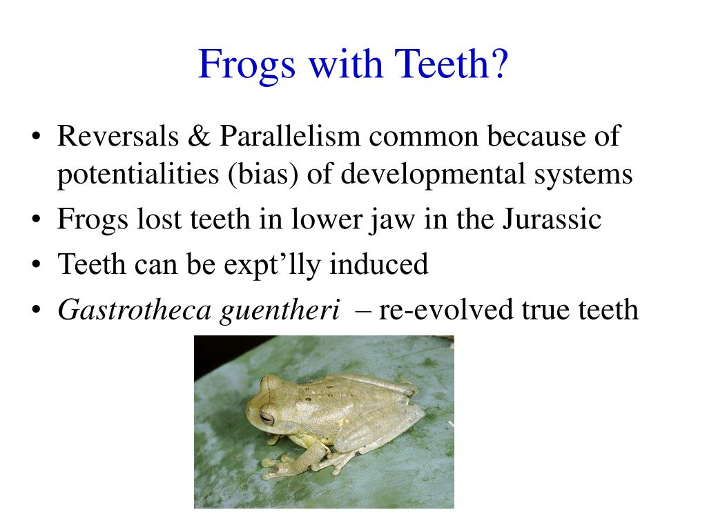 Frogs with Teeth?