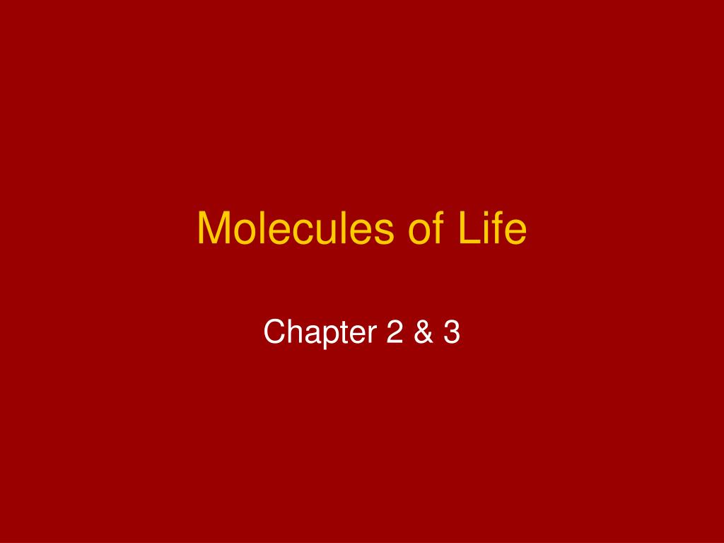 molecules of life l.