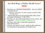 are bed bugs a public health issue yes