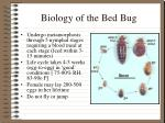 biology of the bed bug19