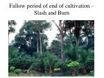fallow period of end of cultivation slash and burn