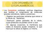los organelos citoplasm ticos19