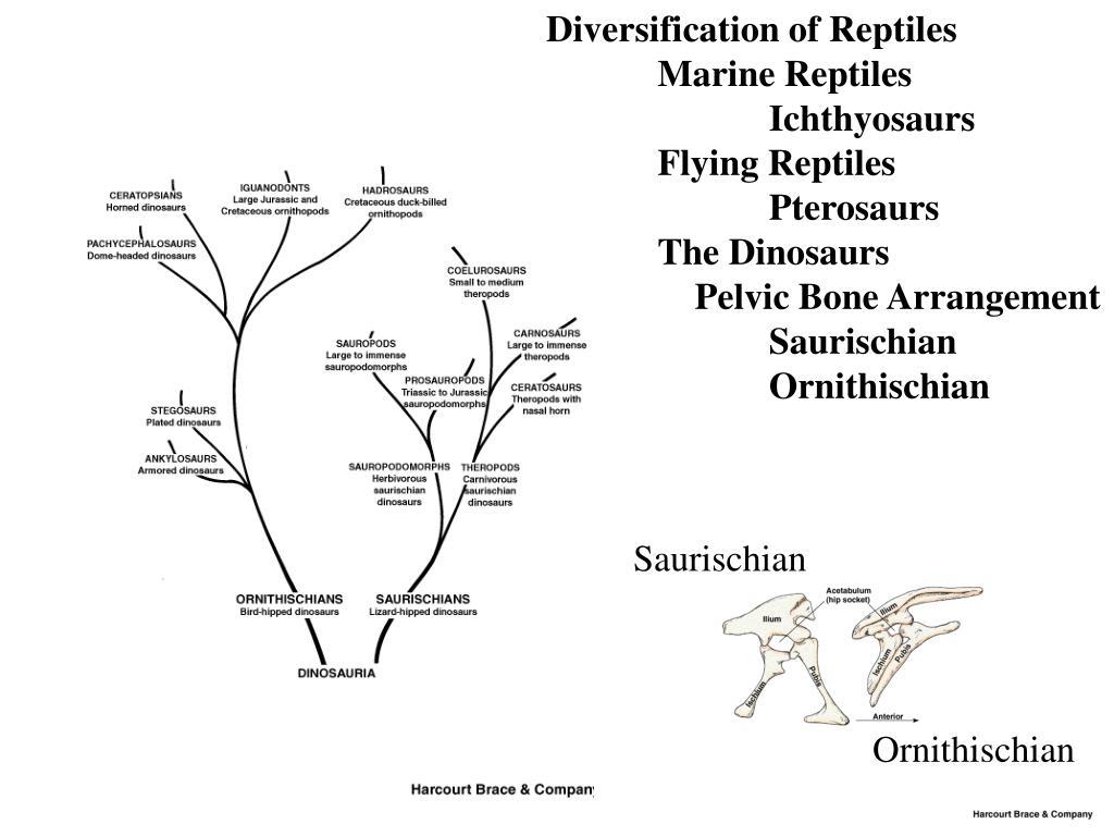 Diversification of Reptiles
