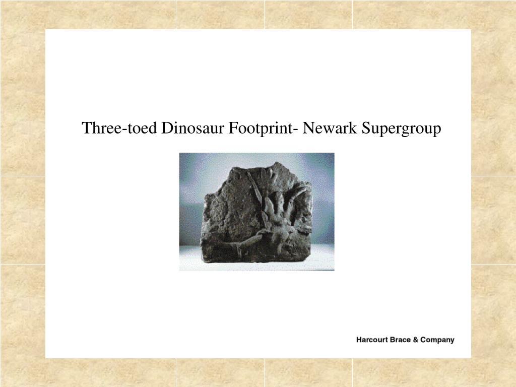 Three-toed Dinosaur Footprint- Newark Supergroup
