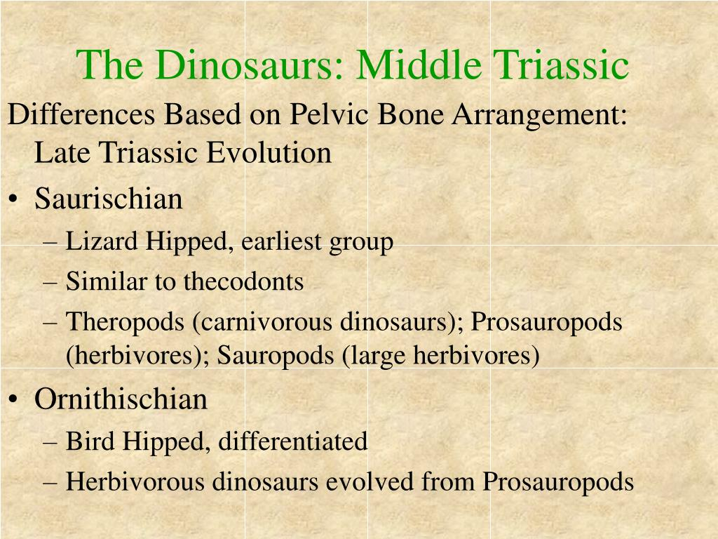 The Dinosaurs: Middle Triassic