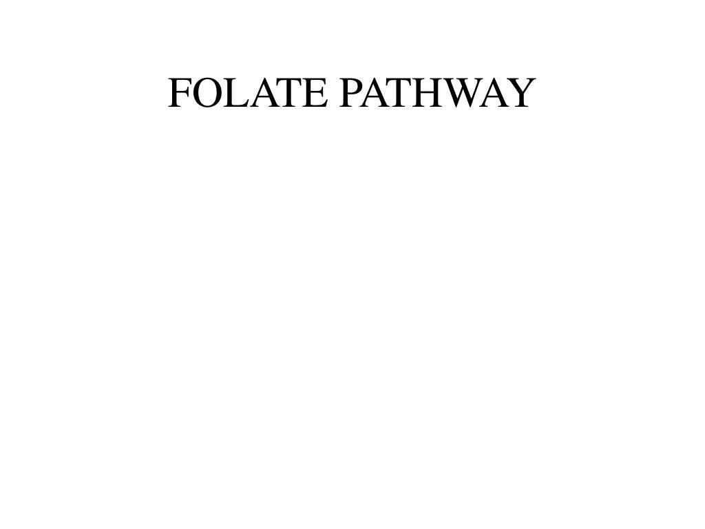 FOLATE PATHWAY