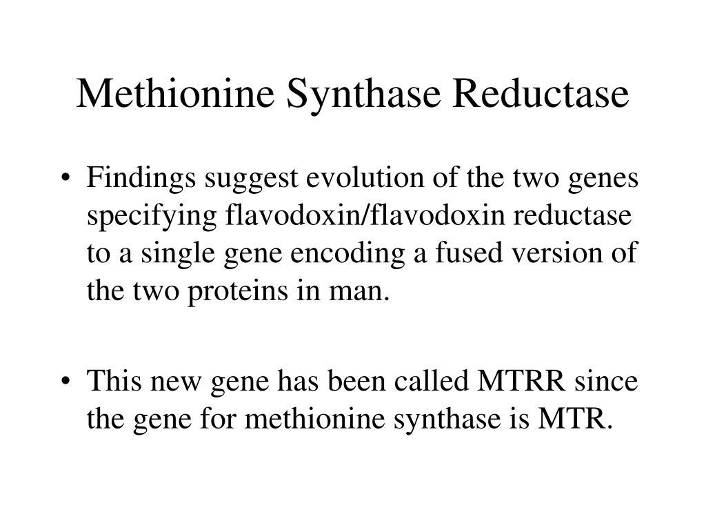 Methionine Synthase Reductase