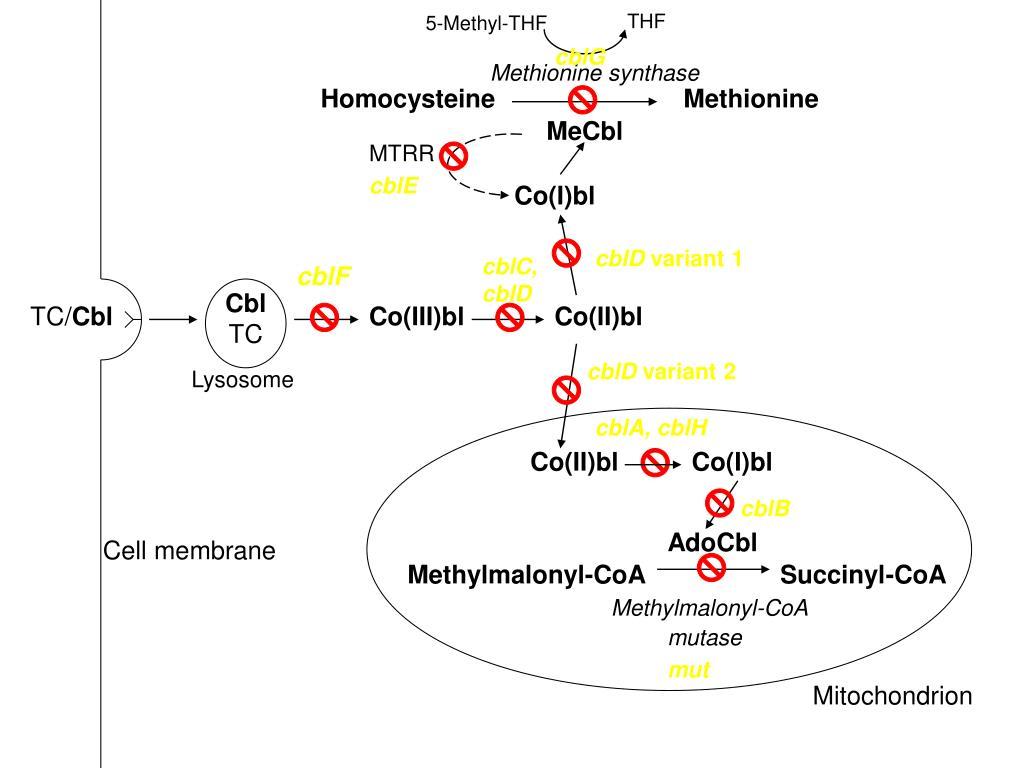 5-Methyl-THF
