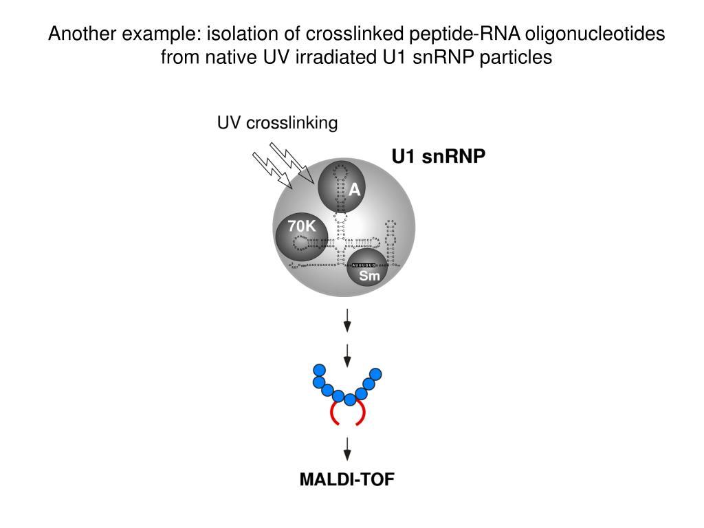 Another example: isolation of crosslinked peptide-RNA oligonucleotides