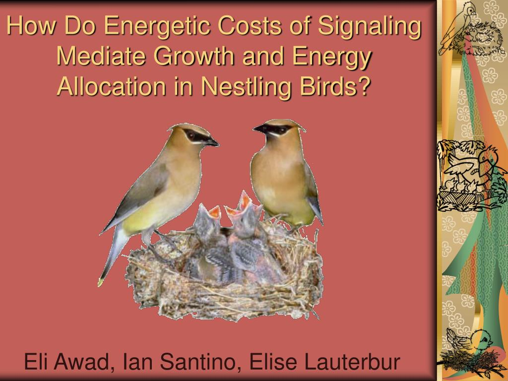 how do energetic costs of signaling mediate growth and energy allocation in nestling birds l.
