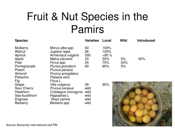 Fruit nut species in the pamirs