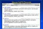 mouse gapd records