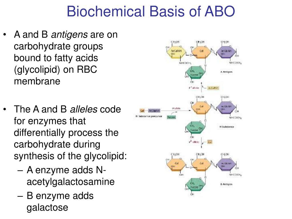 Biochemical Basis of ABO