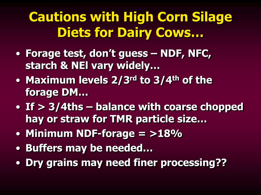 Cautions with High Corn Silage Diets for Dairy Cows…