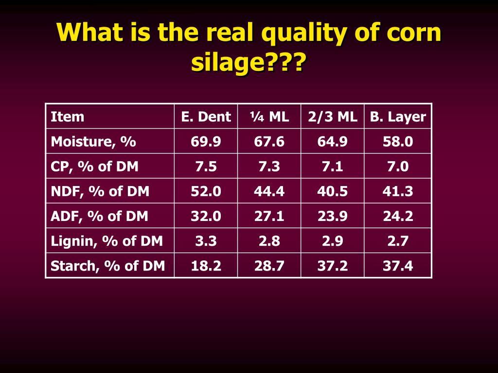 What is the real quality of corn silage???