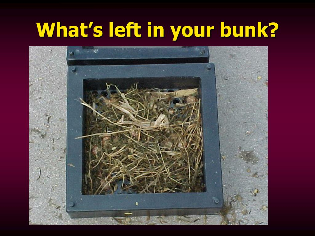 What's left in your bunk?