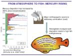 from atmosphere to fish mercury rising