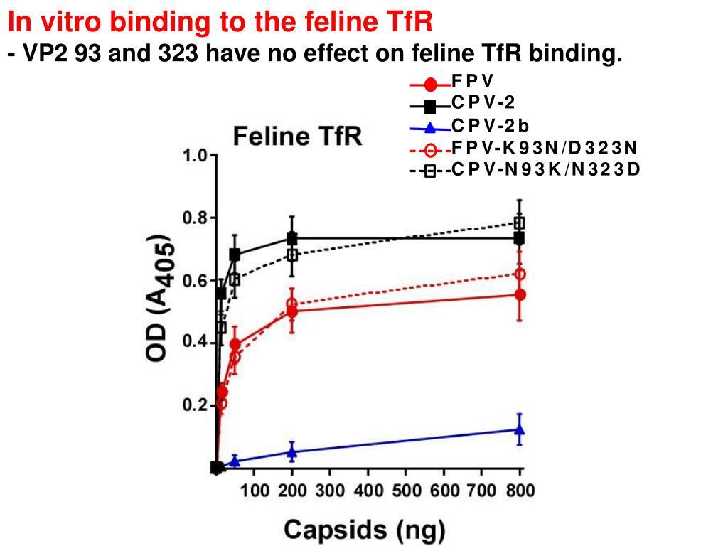 In vitro binding to the feline TfR